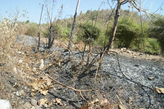 Ditemukan Banyak Titik Api