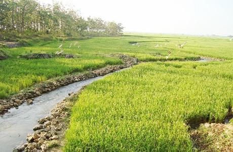 Pertanian Selalu Jadi Bahan Kampanye Politik