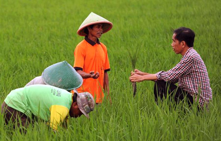 Milenial Jadi Petani Sangat Sedikit, Pemerintah Setempat Dituntut Putar Akal