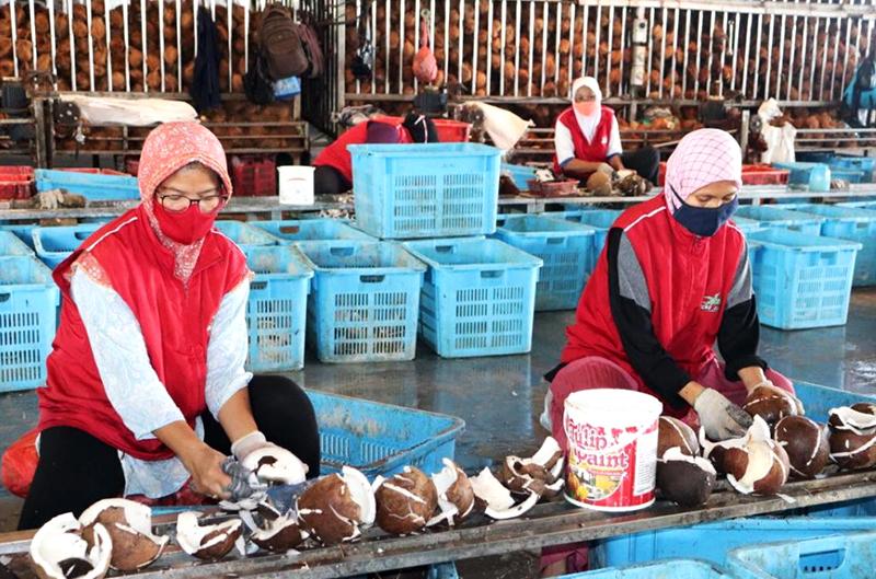 Produk Olahan Kelapa Indonesia Laris Manis di Pasar Dunia