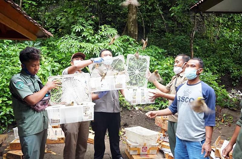 Ratusan Ekor Burung Hasil Razia di Sumbawa Dilepas Ke Alam Bebas