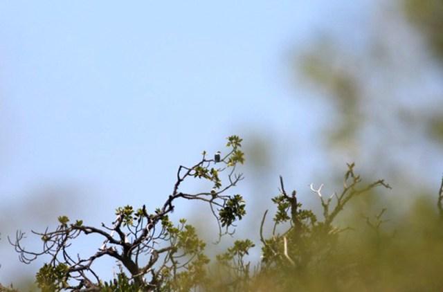 Pulau Panjang Burung 1