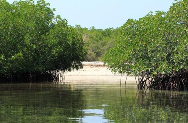 Pulau Panjang Mangrove