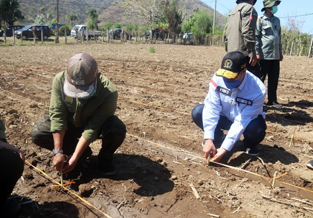 Lahan Kering di Sumbawa Barat Ditanami Kopi Robusta dan Rumput Biograss Agrinak 5