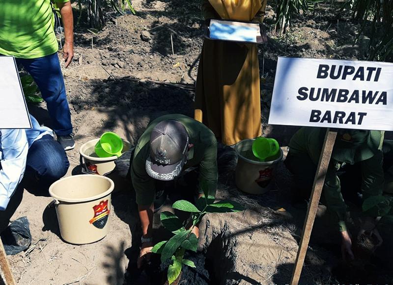 Lahan Kering di Sumbawa Barat Ditanami Kopi Robusta dan Rumput Biograss Agrinak