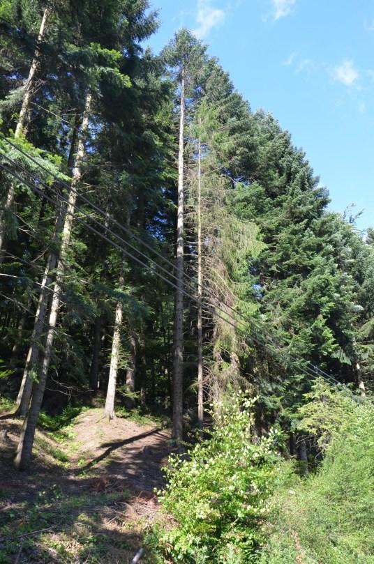 Spokój lasu