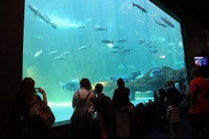 الأكاوريم أو حوض السمك (Tow Oceans Aquarium)