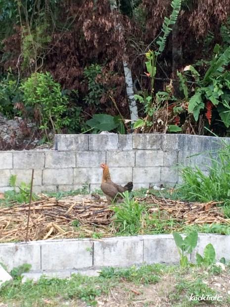 jamaika-2015-port-antonio-1-3