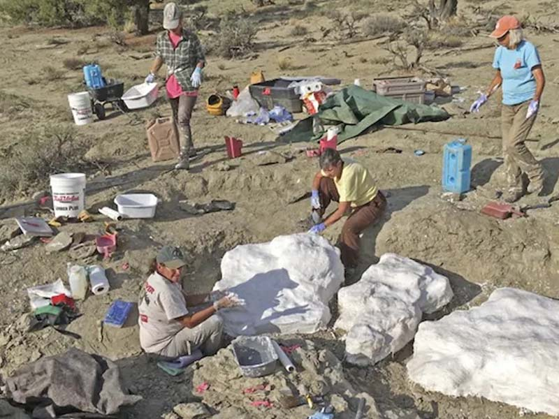 Mass fossil site may prove tyrannosaurs lived in packs