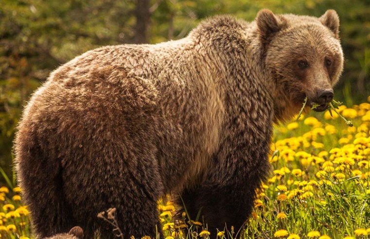 Bear Finds Lost GoPro And Shoots A Selfie Video With It