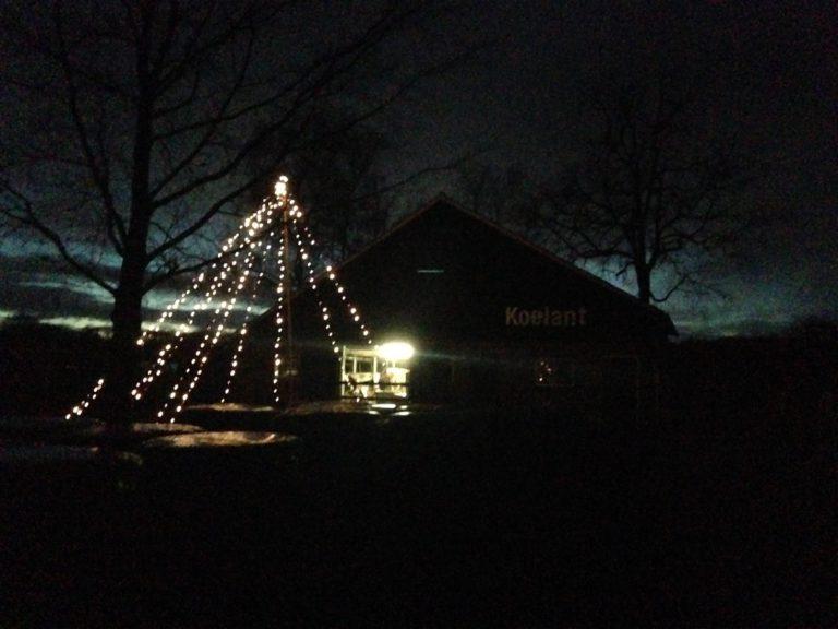 Kerstboom koeienstal Koelant