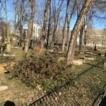 Blick über den Geusenfriedhof, im Hintergrund die Universitätsbibliothek, Bild: Uli Kievernagel