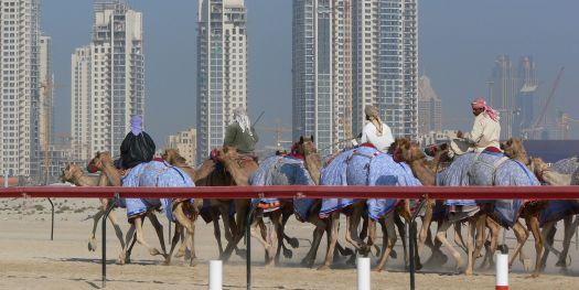 Kamelrennen in Dubai, Bild: Lars Plougmann / CC BY-SA (https://creativecommons.org/licenses/by-sa/2.0)