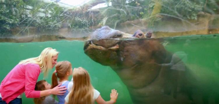 نتيجة بحث الصور عن Kölner Zoo