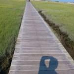 Ein erfüllter Traum: Besuch einer Public Library! Teil 1: Provincetown