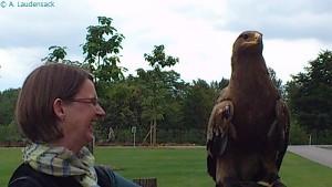 Der Adler wiegt bloß 2,5 kg
