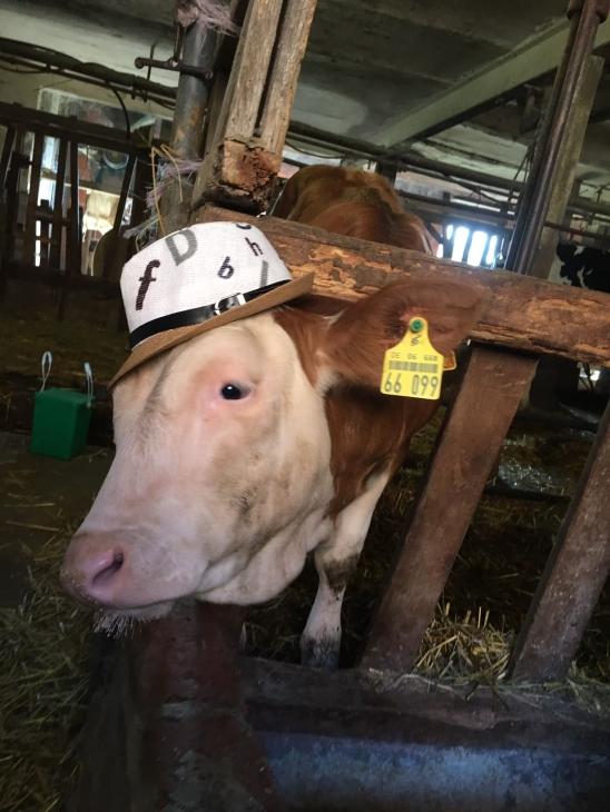 Kuh mit Basecap