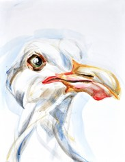 Seagull, portrait   acrylic on canvaspaper   50x70 cm  Loris,Teguise Lanzarote ES