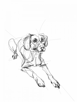 Dog Xamber  Digital drawing, print available A4