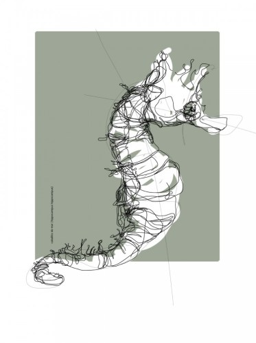 Sea horse, Caballito del mar   digital drawing   prints available