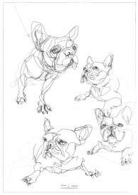 French Bulldogs | Digital drawing collage, print available A4 and A3