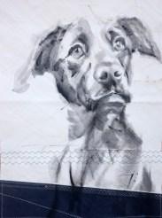 Dog on sail 04|Acrylic on sailcloth | 50x70 cm