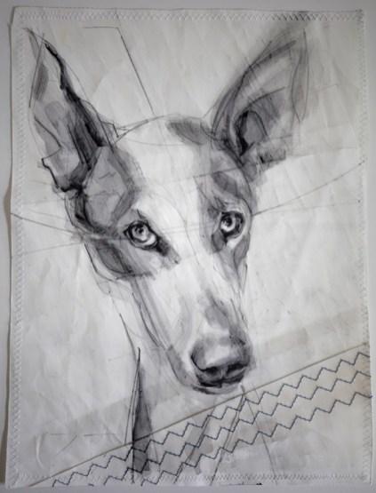 Portrait of Lucky Podenco Dog