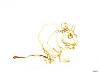 Yellow rat | Ink drawing on paper | A3