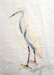 Cattle Egret / White Egret   Acrylic paint on sail   50x70 cm   Gallery Guangzhou CN