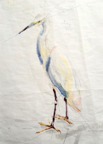 Cattle Egret / White Egret | Acrylic paint on sail | 50x70 cm