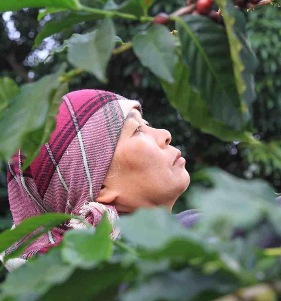 KoffiePro - Thailand