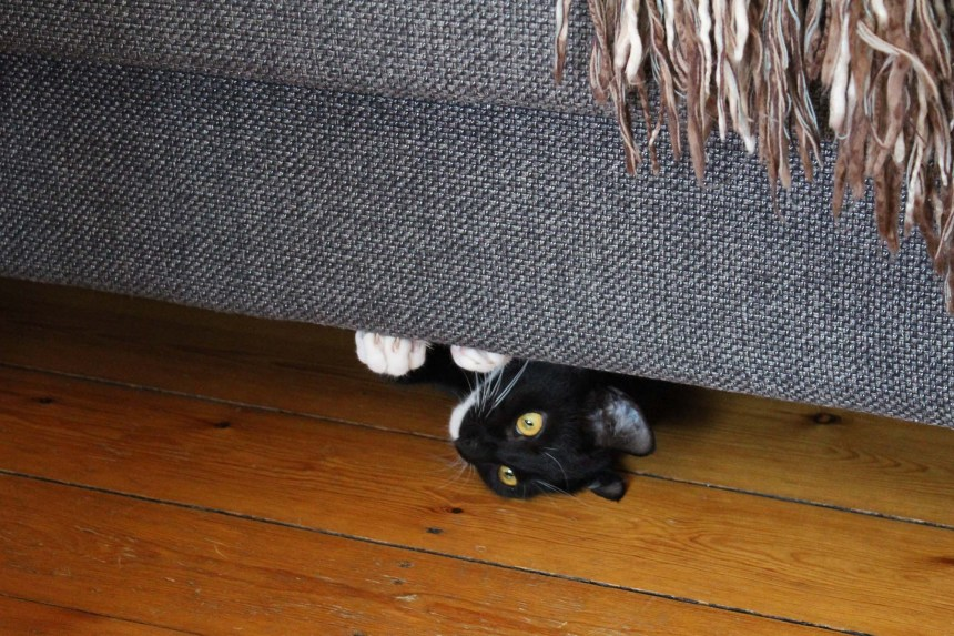 Fie under sofa