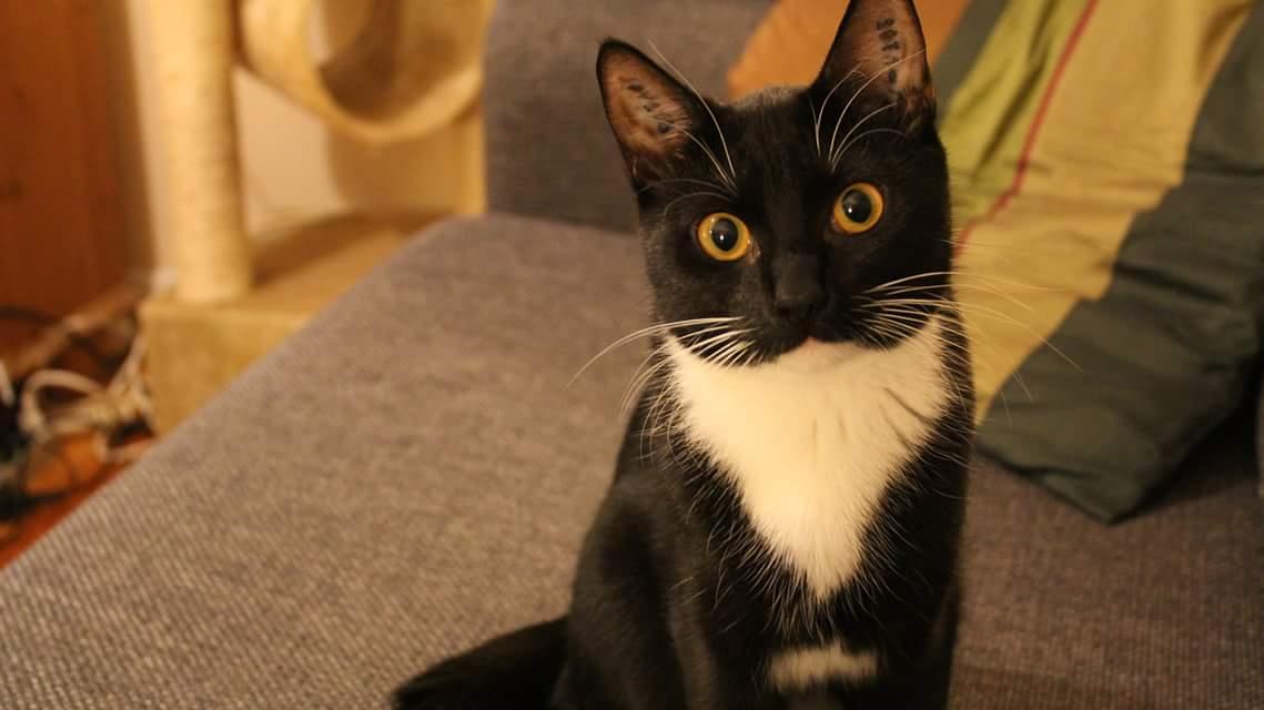 5 ting der stresser din kat