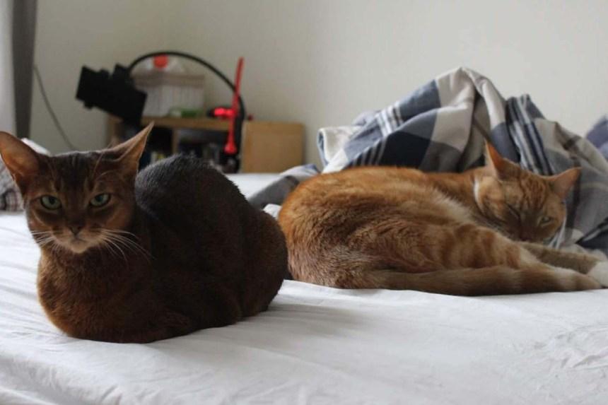 Jara og Stoffer - naptime buddies