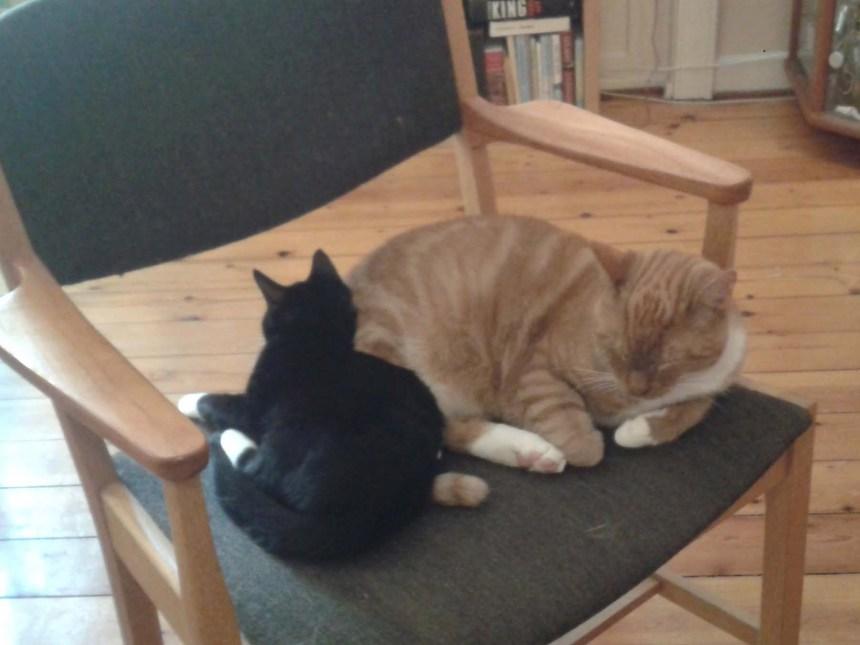 Stoffer og Fie på stolen
