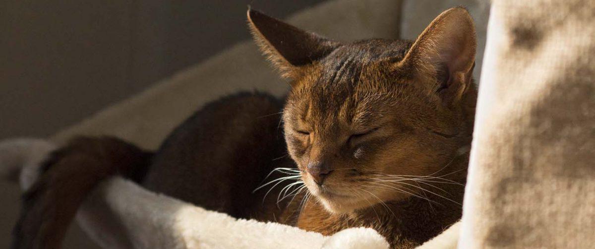 Hvis din kat hoster - Jaras radiatorseng