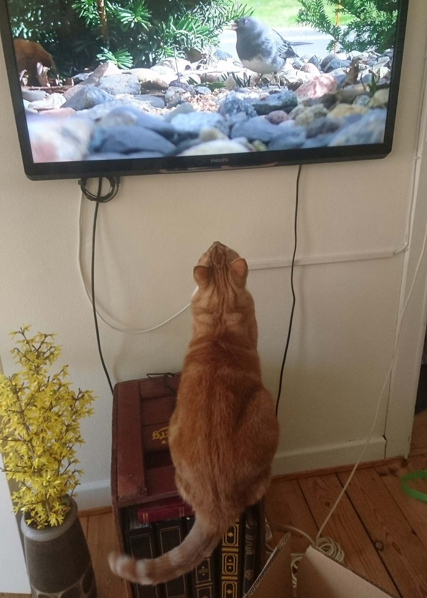 Cat tv Stoffer
