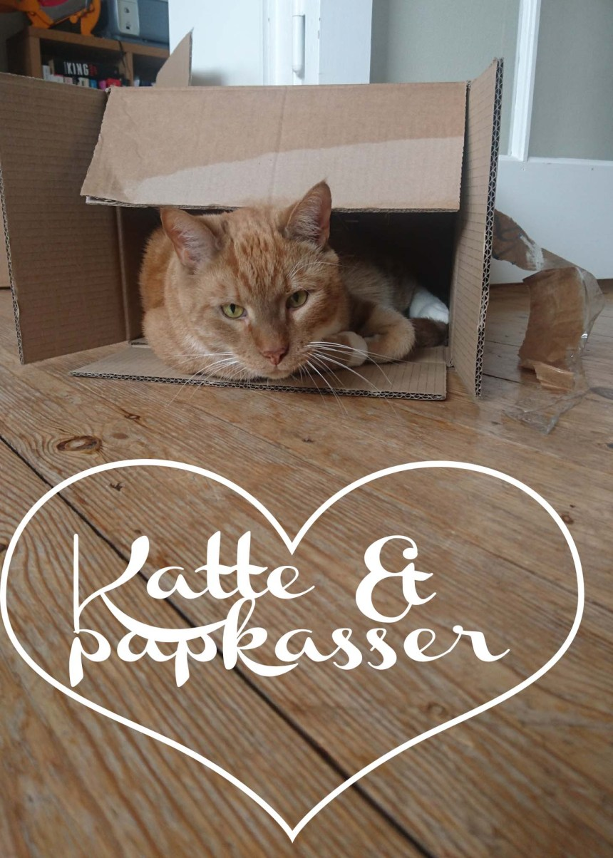 Katte og papkasser