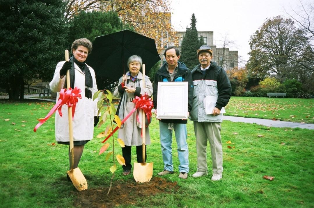 """Ann-Marie Metten, Joy Kogawa, Todd Wong holding """"Obasan Cherry Tree Day proclamation"""", David Kogawa – photo Deb Martin."""