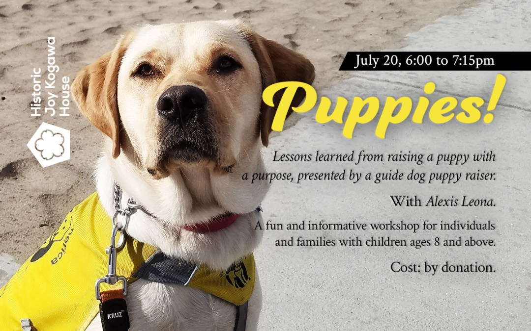 Puppies! Lessons learned from raising a puppy with a purpose