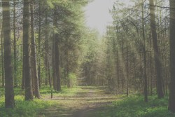 forested area with dirt road and light rays shining down