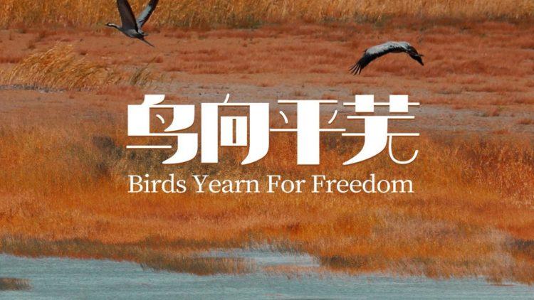 鳥,平蕪にゆく