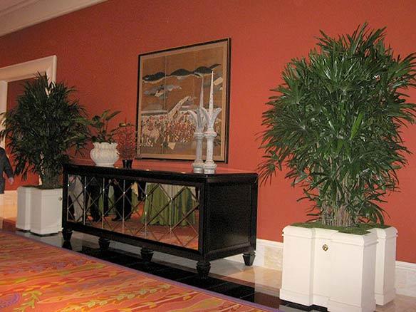 Hawaiian grown rhapis by Kohala Nursery used in hotel corridor