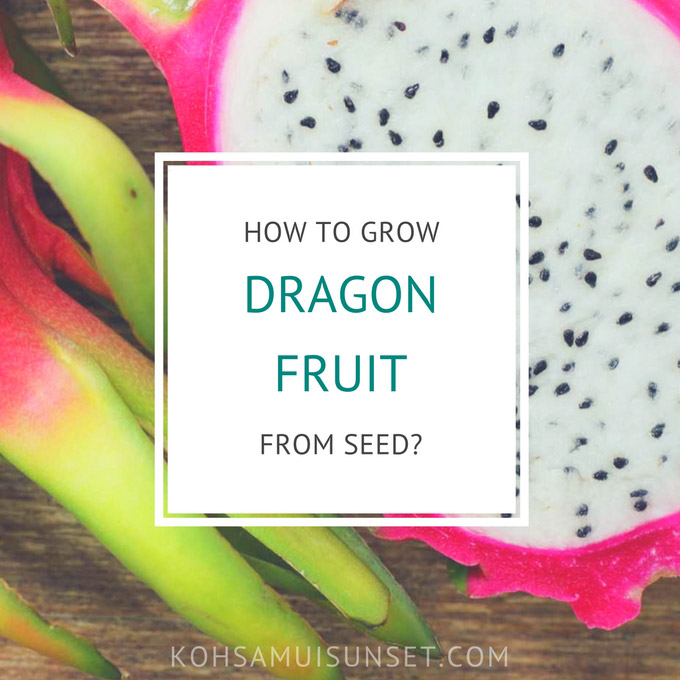 Growing dragon fruit: how to grow dragon fruit from seed?