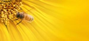 le api per combattere l'allarme terrorismo