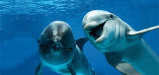 Delfini e l'incredibile linguaggio talmente evoluto da essere considerato affine a quello umano