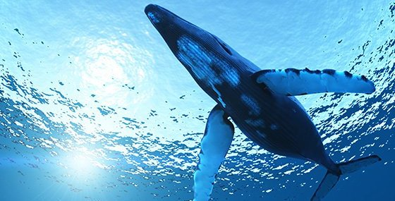 balenottere Balenottera azzurra in Antartide