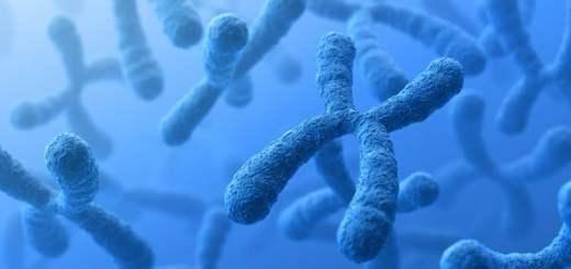 Danza e movimento dei cromosomi