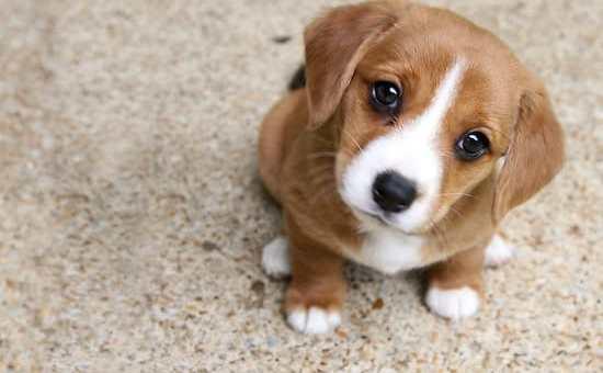 Parlare al cane come fosse un bambino è efficace