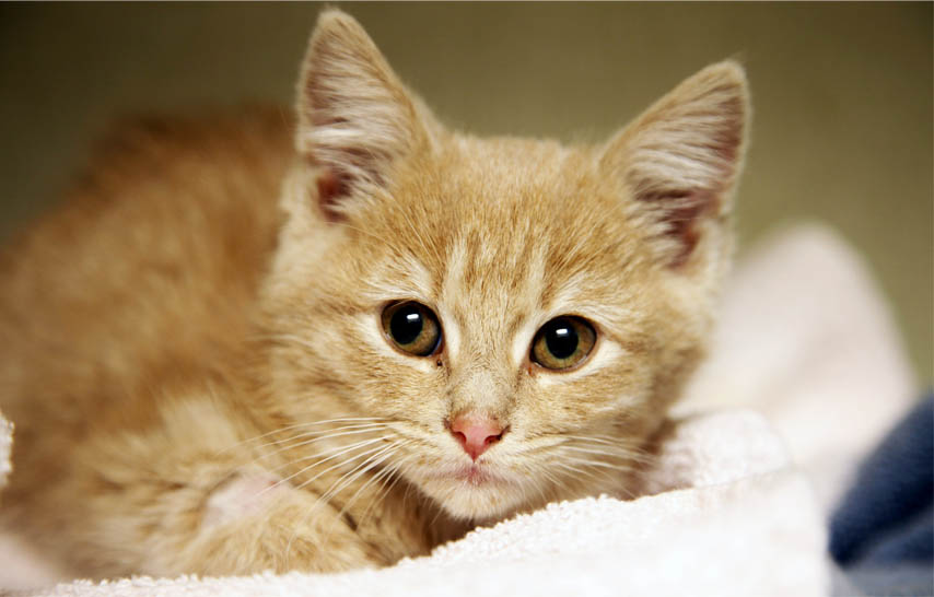 Science Says Domesticated Cats_476395